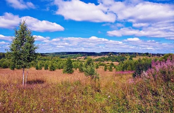 Отдых в Ярославской области летом 2017 г. Лечение в ...